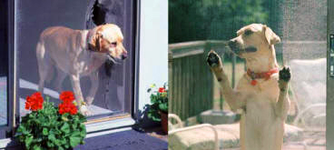 Pet-Resistant Pet Screens